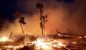 Con l'amazzonia brucia il nostro futuro!